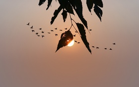 Обои закат, небо, птицы