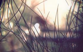 Обои макро, свет, пейзаж, иголки, Природа, ель, сосна