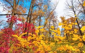 Обои осень, небо, листья, облака, деревья, багрянец