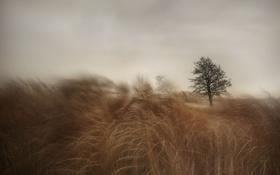 Обои поле, трава, дерево, ветер