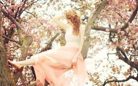 Обои девушка, солнце, цветы, дерево, волосы, платье