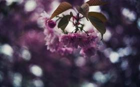Картинка дерево, лепестки, цветы, боке