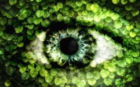 Обои листья, природа, глаз