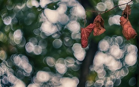 Обои осень, листья, сухие, боке