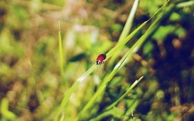 Картинка зелень, макро, Трава