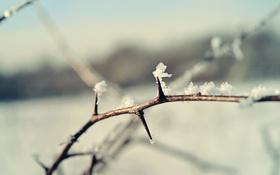 Обои зима, снег, ветка