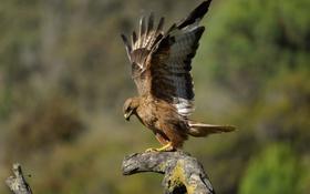 Картинка птица, крылья, ветка, перья, клюв