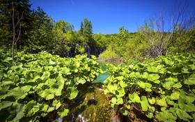 Обои озеро, Plitvice Lakes National Park, зелень, Хорватия, деревья, водопады, листья