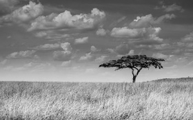 Картинка небо, облака, дерево, кусты, солнечный, саванны