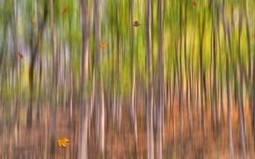 Обои осень, лес, листья, деревья