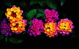 Обои листья, природа, сад, соцветие