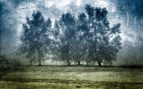 Обои поле, деревья, текстура