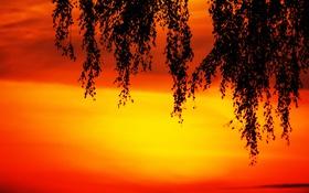 Обои ветка, силуэт, зарево, небо, облака, листья