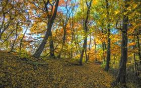 Картинка осень, лес, листья, деревья, ветви, солнечный свет