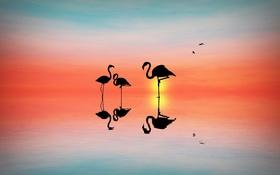 Картинка закат, птицы, фон