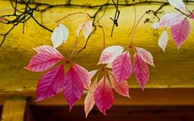 Обои природа, город, осень, листья