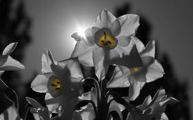 Обои лучи, свет, соцветие, лепестки, природа, солнце