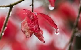 Обои капли, листья, природа