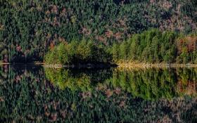 Картинка лес, вода, природа, озеро, отражение