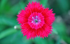 Обои экзотика, лепестки, растение, природа, цветок