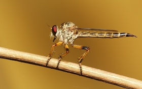 Картинка insect, brown, wings, paws, eye, branch, robberfly
