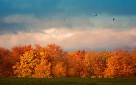 Картинка осень, небо, облака, деревья, полет, птицы, поля