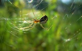 Обои солнце, насекомые, паутина, паук, охотница