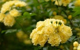 Картинка цветы, кустарники, цветущие деревья