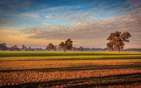 Обои поле, небо, облака, деревья