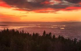 Обои небо, деревья, пейзаж, Норвегия, Осло