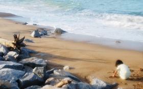 Обои песок, камни, пляж, прибой, ребёнок, море