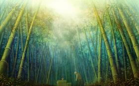 Картинка лес, листья, солнце, природа, аниме, бамбук, арт