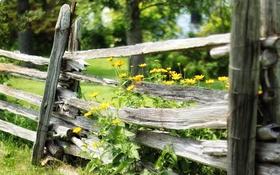 Картинка лето, цветы, забор