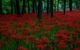 Обои вечер, цветы, деревья, трава, лес