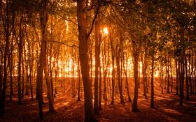 Обои природа, осень, деревья