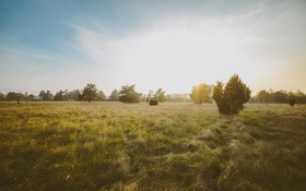 Картинка поле, трава, деревья, горизонт