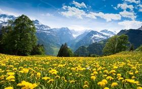 Обои лес, деревья, цветы, горы, поляна, луг, ущелье