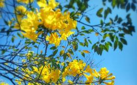 Картинка небо, цветы, дерево, ветка