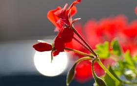 Обои цветок, листья, свет, блеск, лепестки, стебель, блик