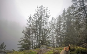 Обои туман, скамья, природа