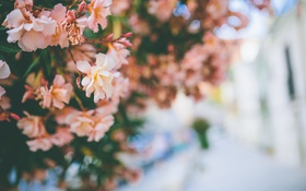 Обои цветы, куст, лепестки
