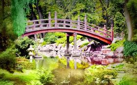 Обои камни, ручей, деревья, природа, мостик, папоротник, парк