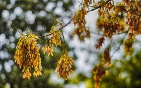 Обои осень, дерево, боке