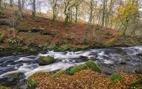 Картинка осень, лес, деревья, река, ручей