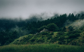 Обои Туман, Деревья, Лес, Камни