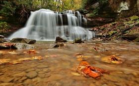 Обои stream, waterfall, leaves, autumn, water, поток, водопад