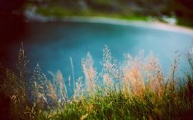 Картинка лето, трава, вода, зеленая