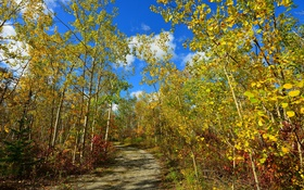 Картинка облака, осень, деревья, дорога, лес, небо