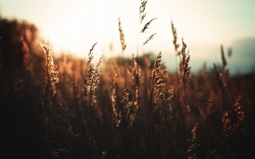 Обои поле, стебли, трава, солнце