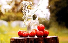 Обои брызги, банка, вода, помидоры, пень